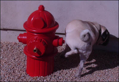 Dog Fireplug In Use