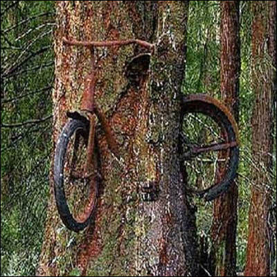Unusual Tree Growth Through Bicycle